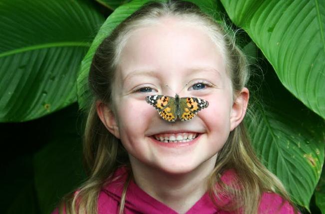 10/Butterfly Pavillon