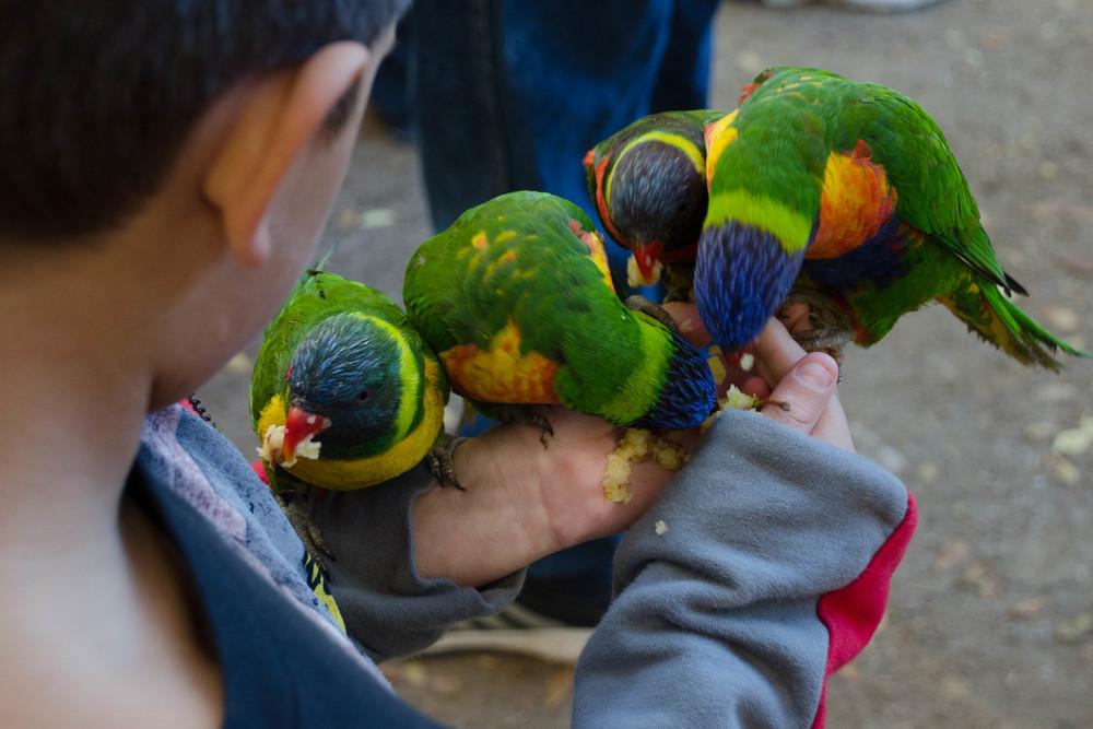 9/Wildlife World Zoo, Aquarium & Safari Park