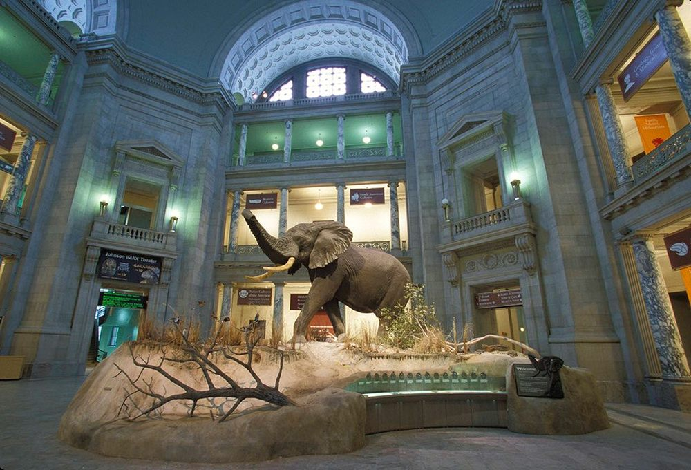 2/National Museum of Natural History