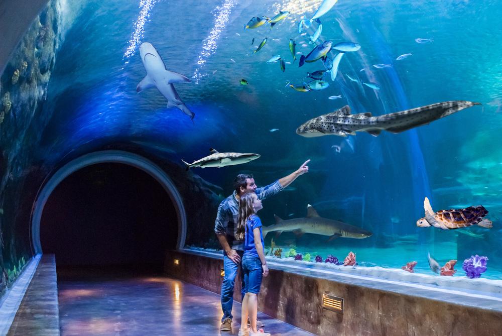 6/The Loveland Living Planet Aquarium