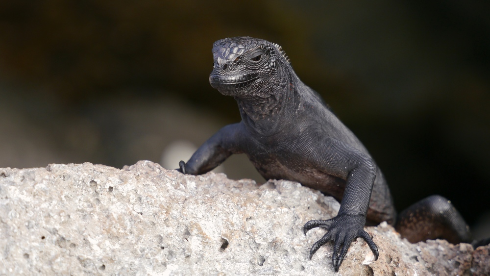 Day 2 (Laza Lizard).jpg
