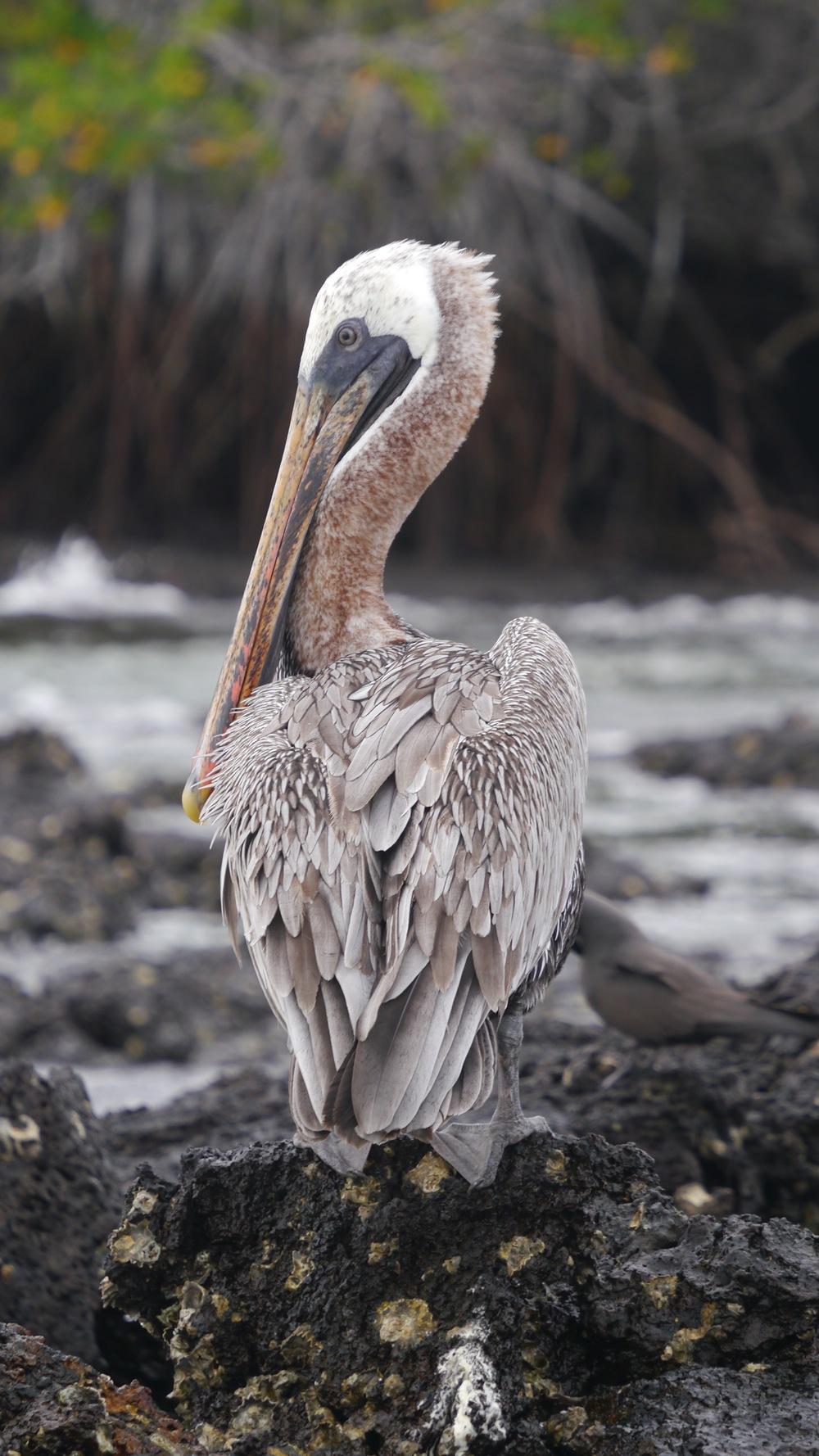 Day 3 (Pelican).jpg
