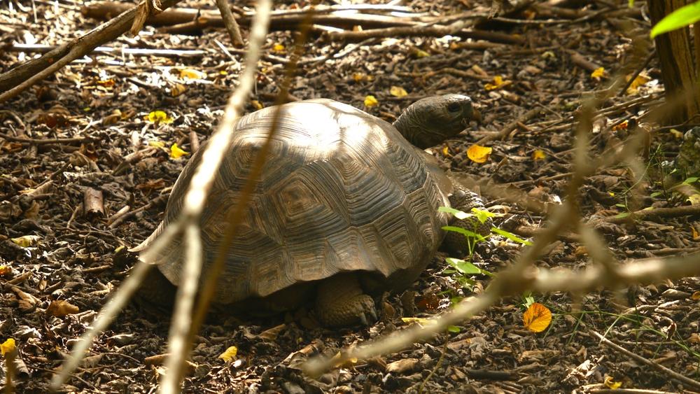 Day 4 (Giant Tortoise).JPG