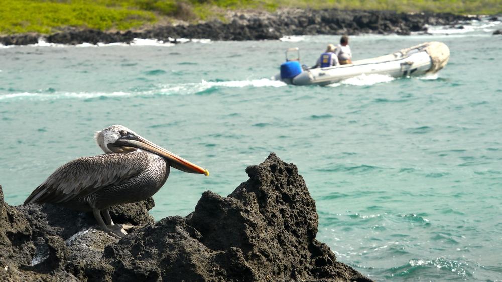 Day 4 (Pelican).JPG