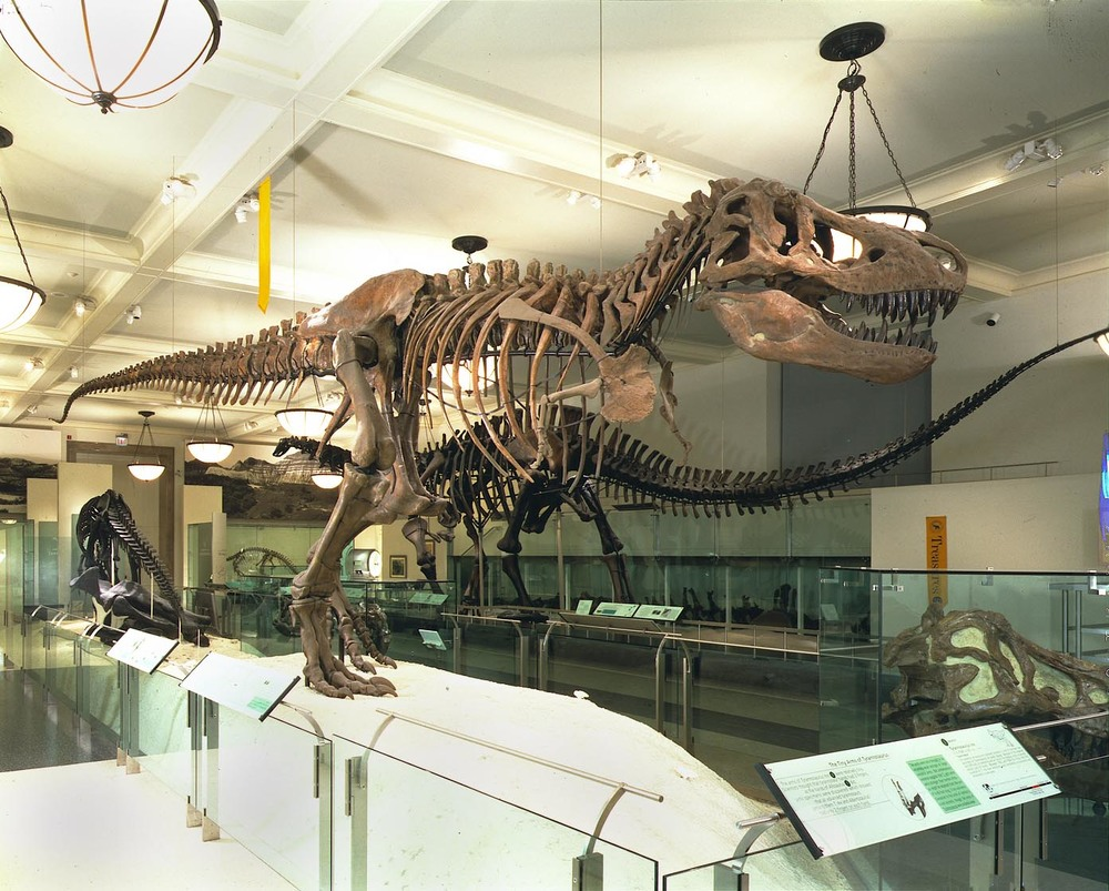 9/American Museum of Natural History
