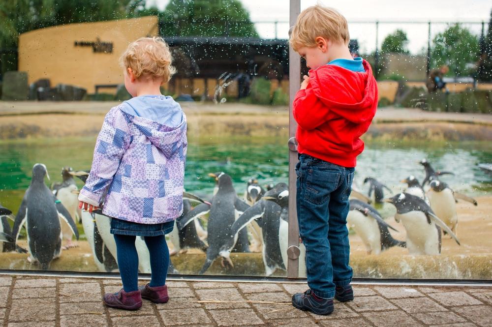 10/Edinburgh Zoo