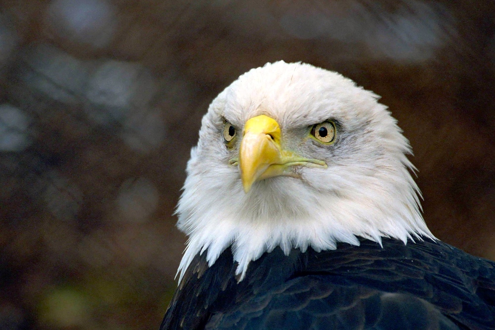 7/Soar with an eagle at Zoo Boise