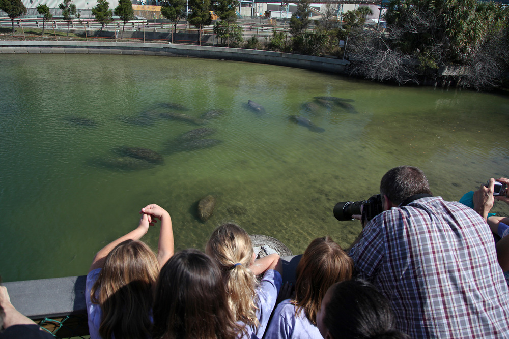 9/TECO Manatee Viewing Center