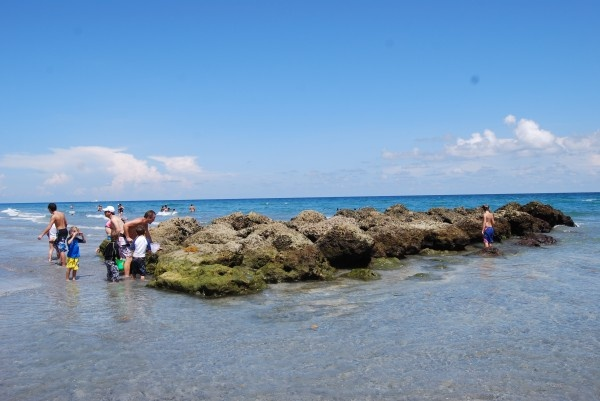 5/Red Reef Park