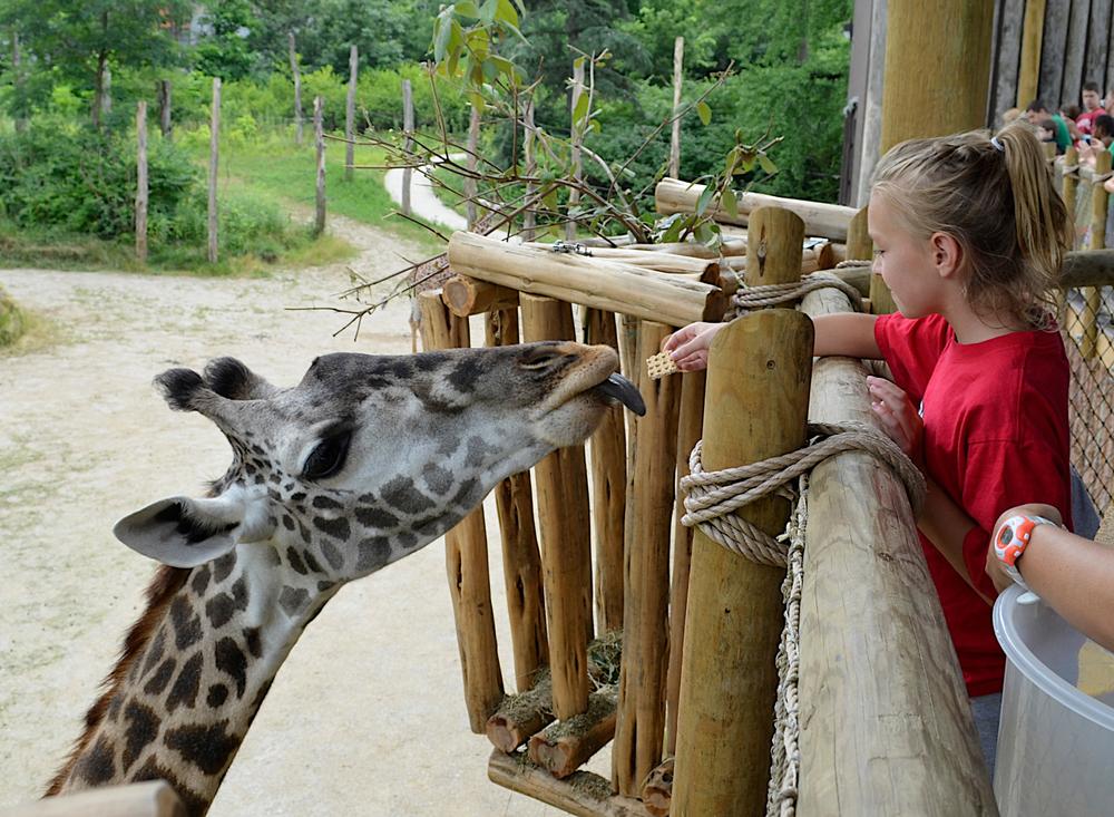 6/Feed a giraffe