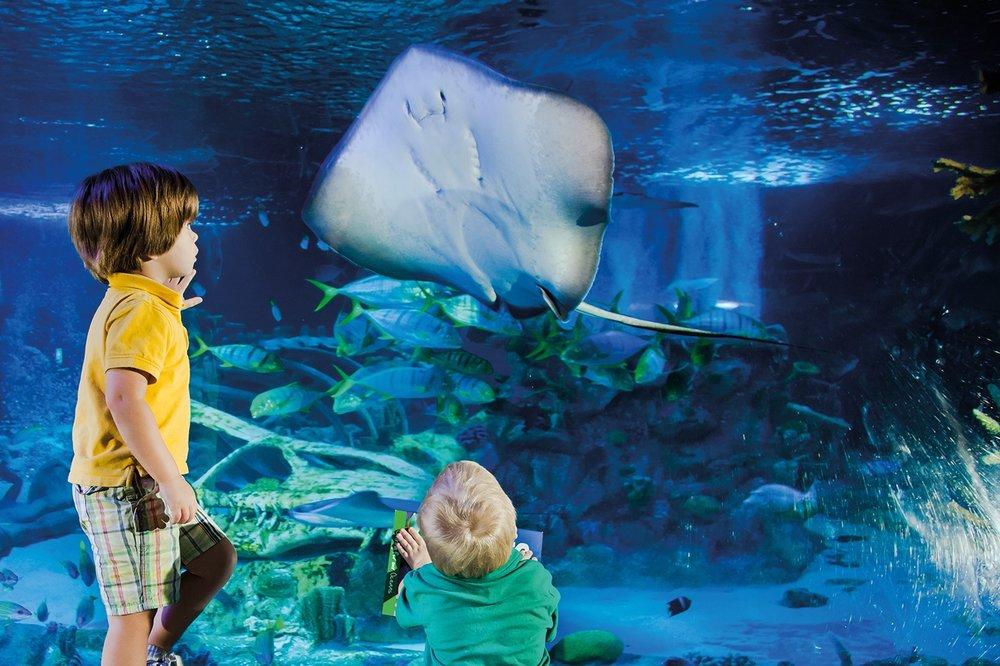 7/SEA LIFE Charlotte-Concord Aquarium