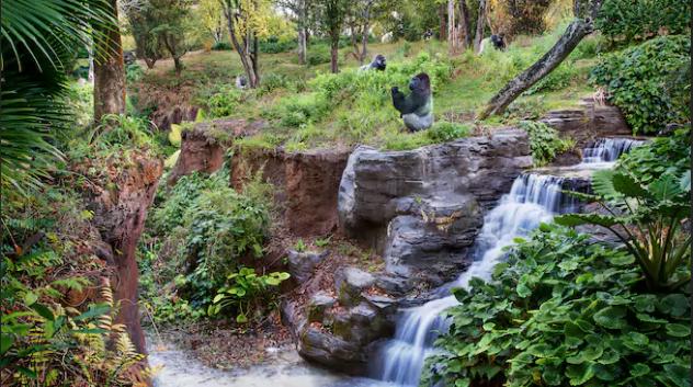 5/Gorilla Falls Exploration Trail
