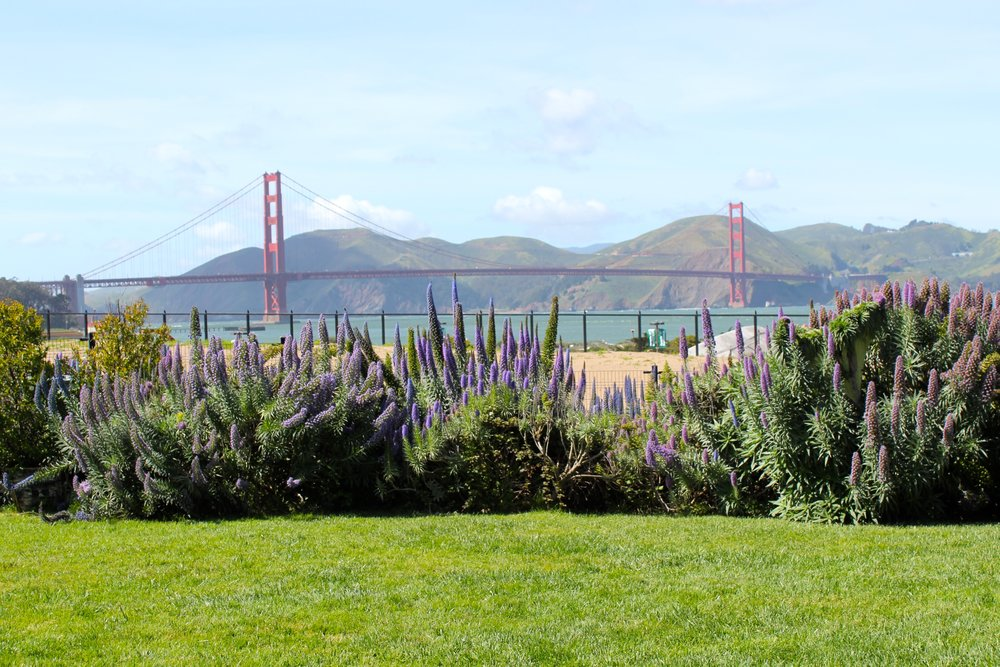 8/Admire the Golden Gate Bridge from a distance