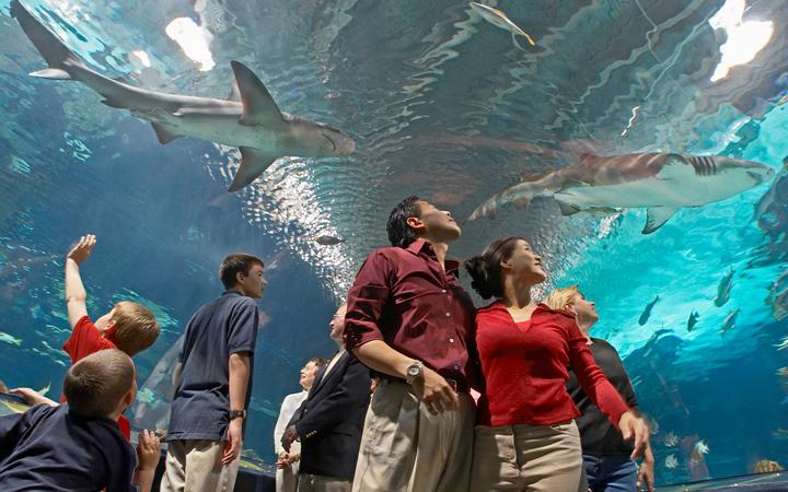 6/Aquariums, children's museums, shows & zoos
