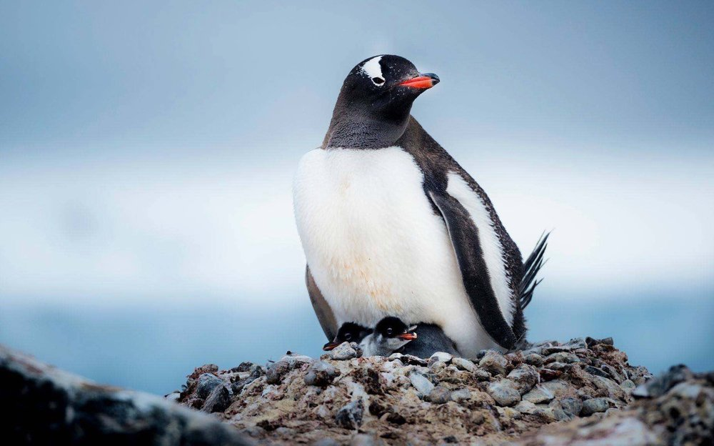 10/Antarctica
