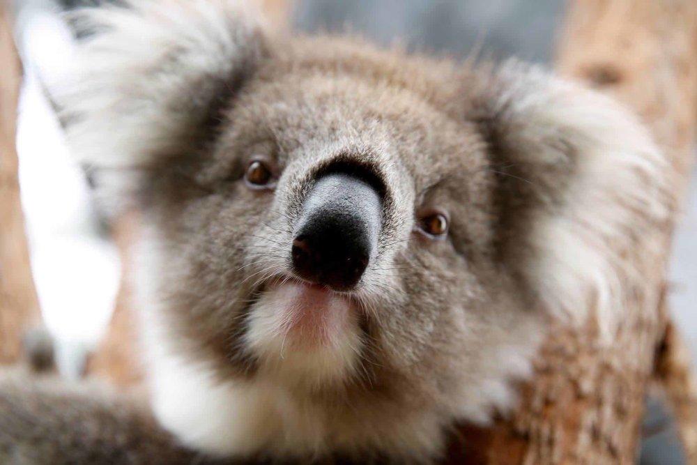 2/Melbourne Zoo