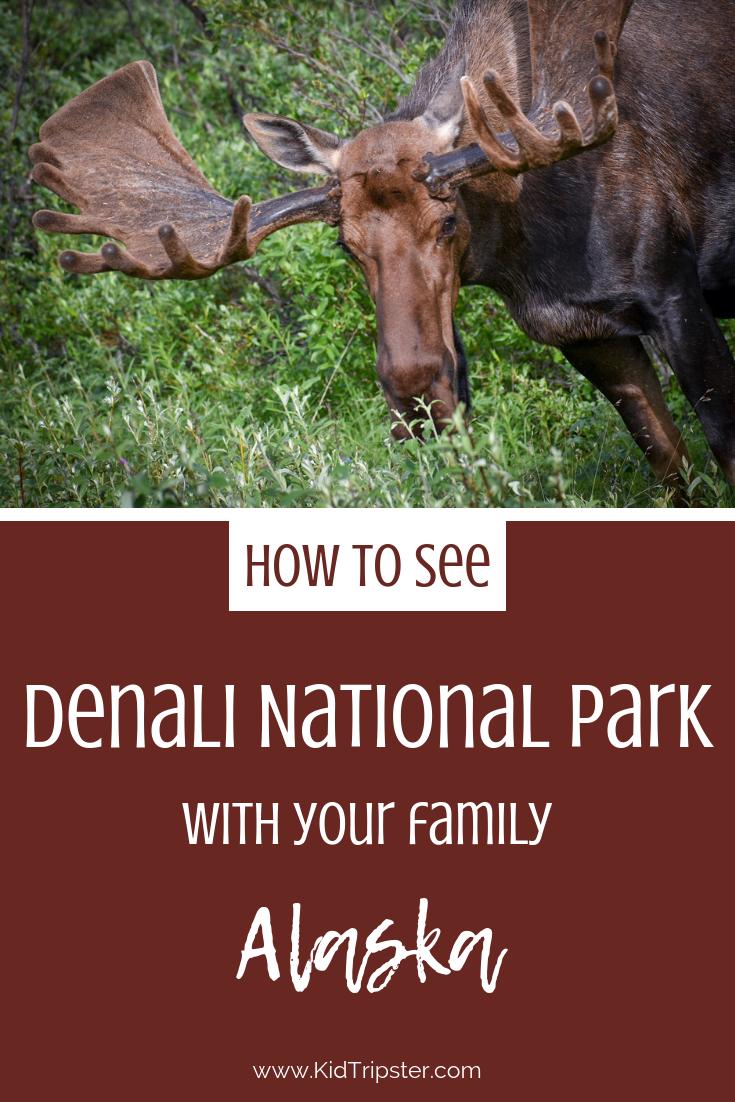 Family Vacation to Denali National Park, Alaska