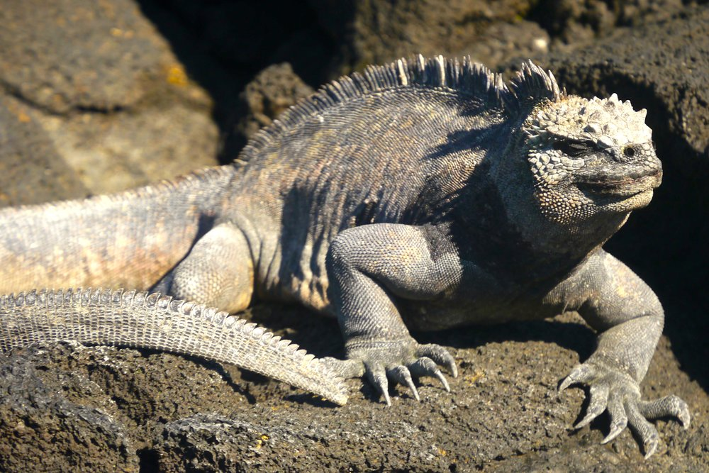 2/Wildlife viewing in the Galápagos