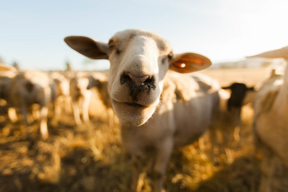 Primal Pastures / Jennifer Chong