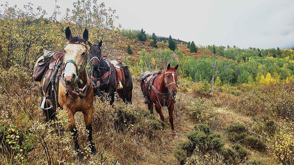 grand-teton-hunting-trips.jpg