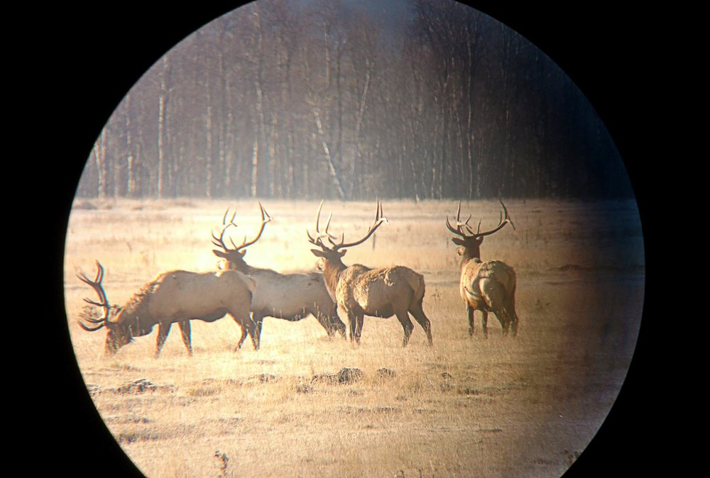 wyoming-elk-spotting-scope-camera.jpg