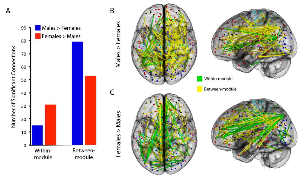 Satterthwaite et al., Cerebral Cortex 2015
