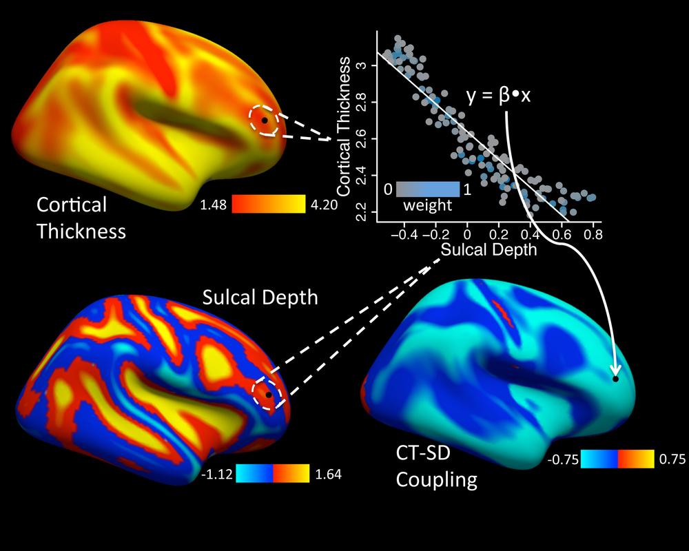 Vandekar et al., Neuroimage 2016