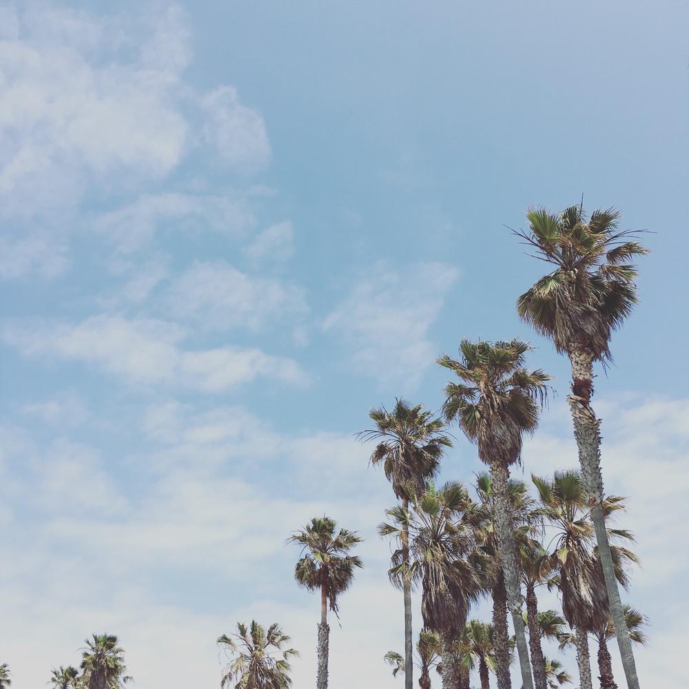 Taken May 2016 in Venice Beach, California.
