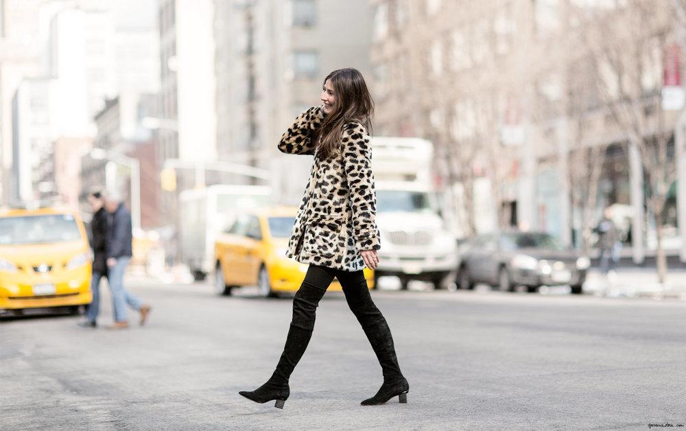leopard_56.jpg