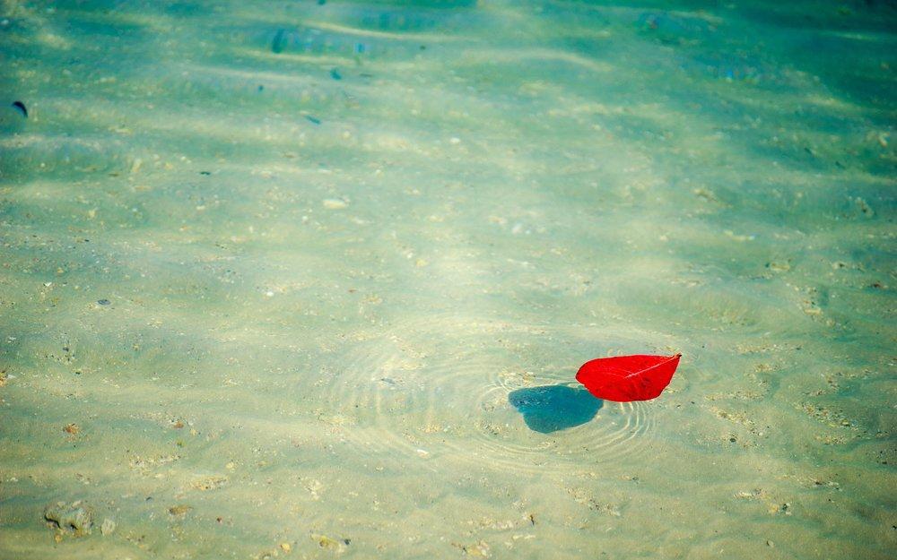 beach-1530881_1920.jpg