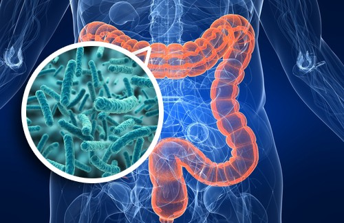 In Gut We Trust The Importance Of Microbiota Dpc16