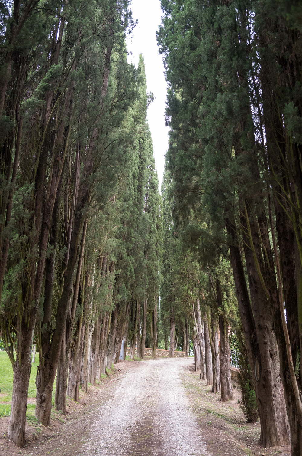 Cypress-lined roads all over Chianti