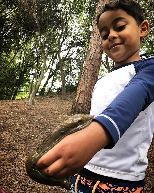A handshake from the forest floor. 🐌  #bayareafamilies #forestschool #forestpreschool #childrenatnatureplay #childinthewild #rewildyourchild #forestplay #natureplay #bayarea#bananaslug #slug