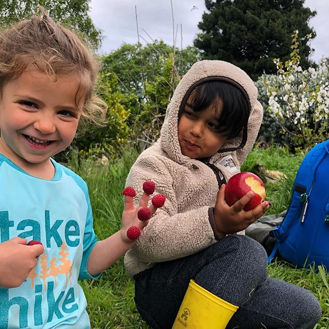 Berry fingers season! 🍓☀️🍃 #springtime #playoutside #preschoolpicnic #communityorchard #communitygardens #littlefriends #letthembelittle #childrenatnatureplay #playoutside #vitaminN