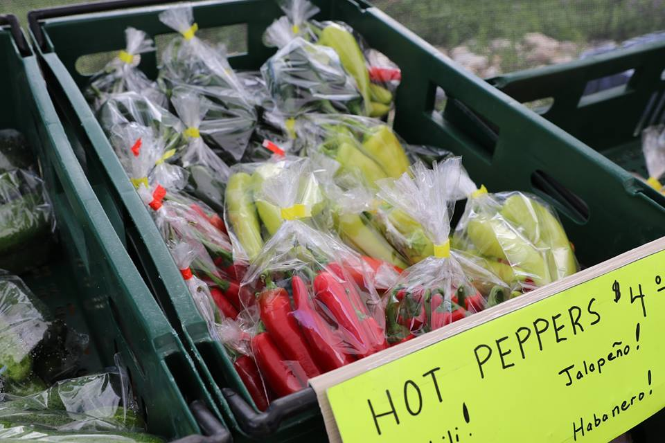 June S4 Peppers.jpg