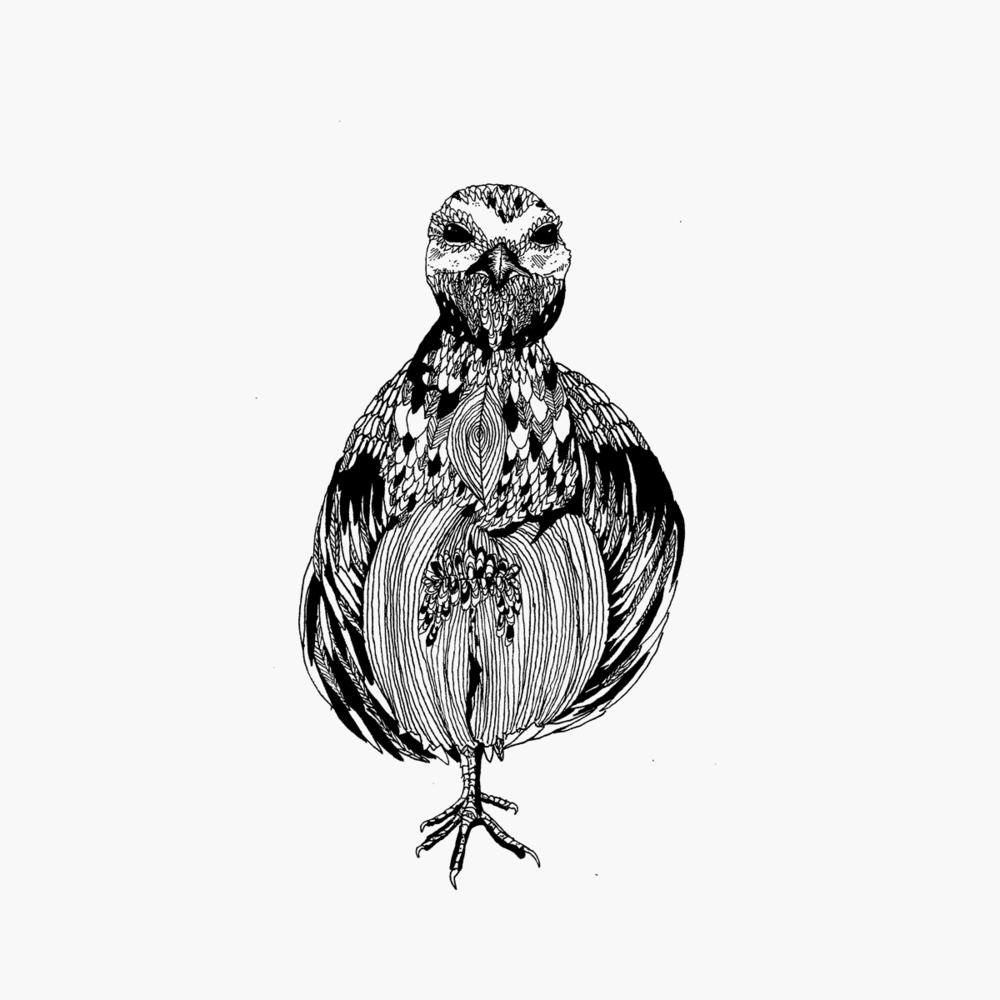 detailed birds drawing prints online byron bay u0026 melbourne