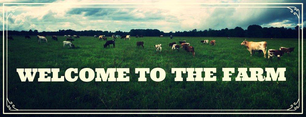 Cattle Field Header.png