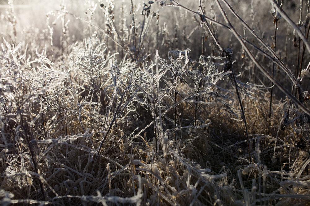 Ice Storm-0490.jpg