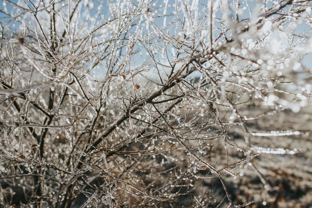 Ice Storm-0522.jpg