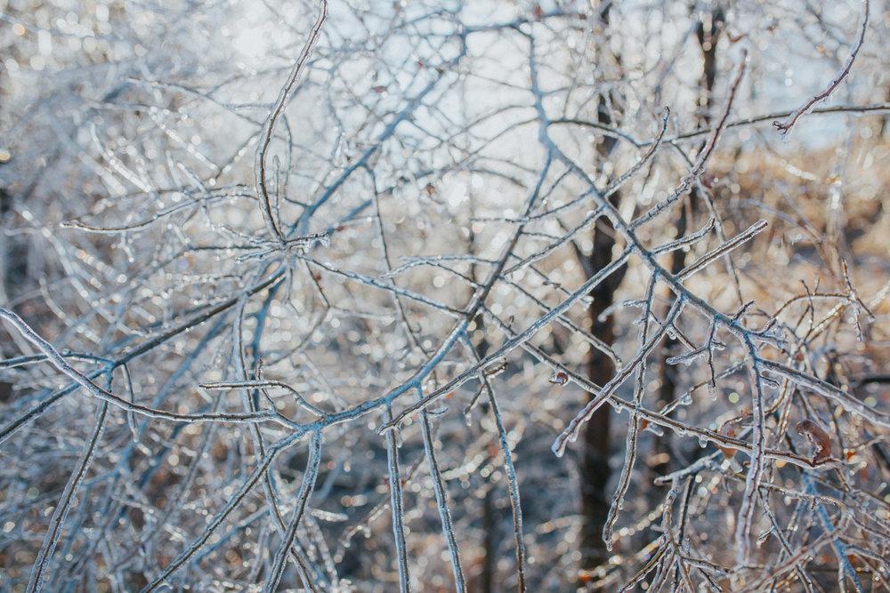 Ice Storm-0606.jpg