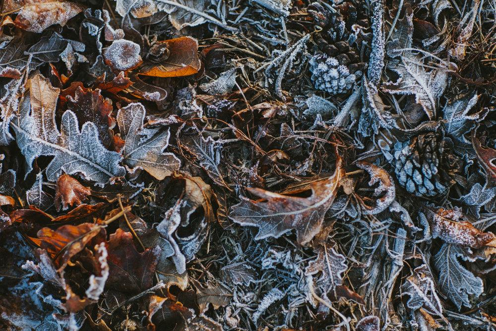 Ice Storm-0785.jpg