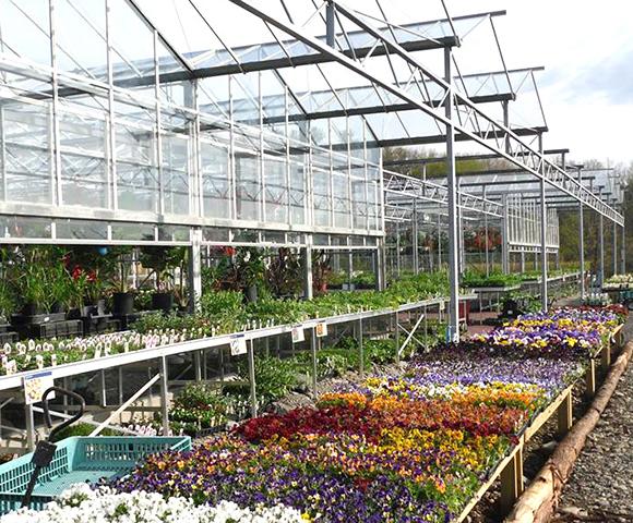Greenhouse1.jpg