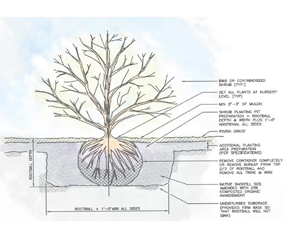 Plantingdetail1.jpg