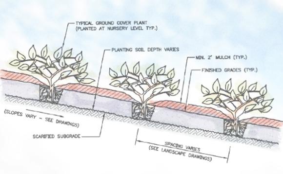 Plantingdetail3.jpg