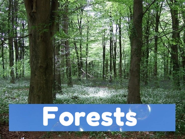 360video forests for 360vr vr