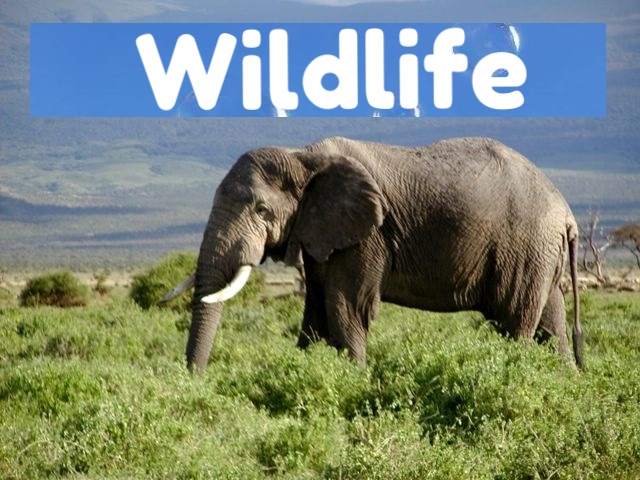 360video wildlife for 360vr vr