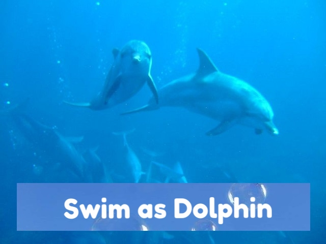 dolphin 360vr by this is me.jpg