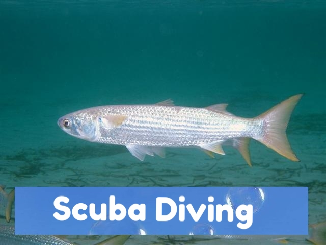 fish 360 vr video.jpg