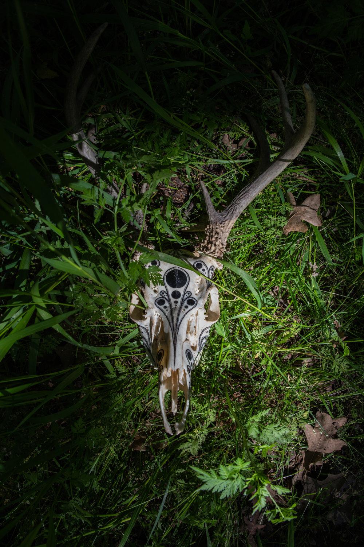 Skulls8.jpg