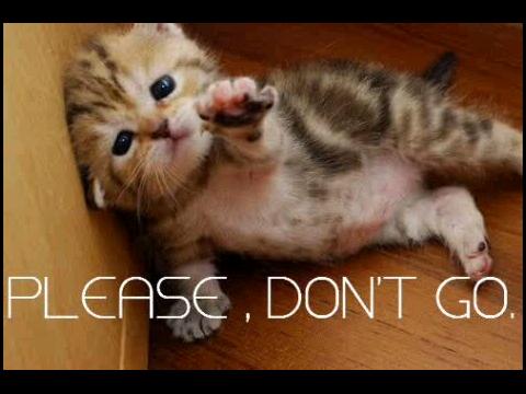 please dont go kitten.jpg